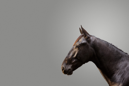 Horse in profile, grey background